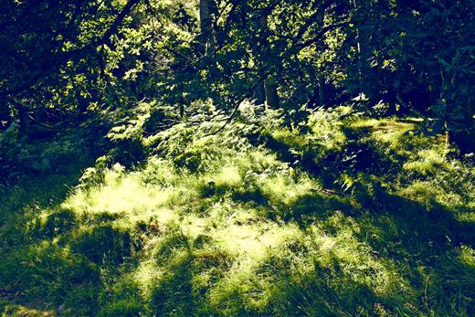 Glendalough_green_Zoetica Ebb_Small_01