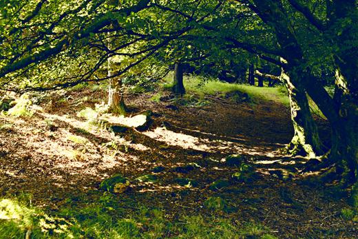 Glendalough_green_Zoetica Ebb_Small_02