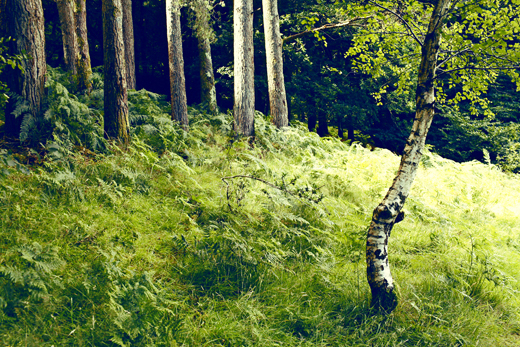 Glendalough_green_Zoetica Ebb_Small_03