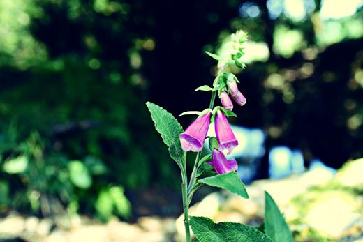 Glendalough_green_Zoetica Ebb_Small_05