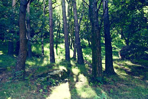 Glendalough_green_Zoetica Ebb_Small_06
