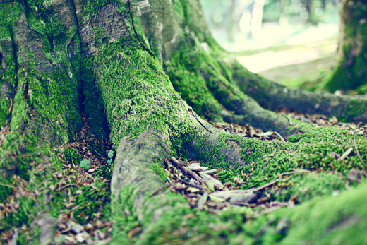 Glendalough_green_Zoetica Ebb_Small_08