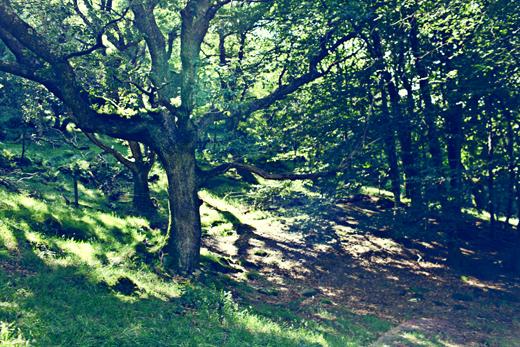 Glendalough_green_Zoetica Ebb_Small_12