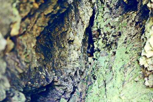 Glendalough_green_Zoetica Ebb_Small_14