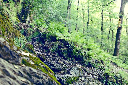Glendalough_green_Zoetica Ebb_Small_19