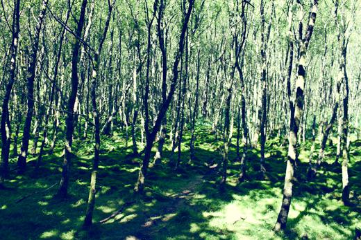 Glendalough_green_Zoetica Ebb_Small_23