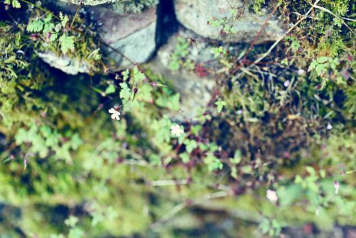 Glendalough_green_Zoetica Ebb_Small_24