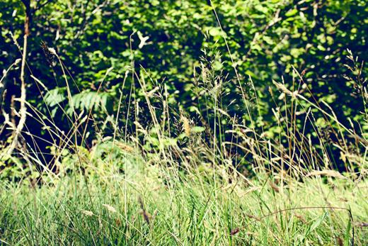 Glendalough_green_Zoetica Ebb_Small_25