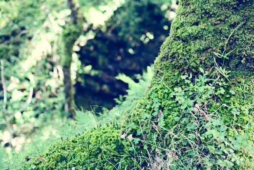 Glendalough_green_Zoetica Ebb_Small_26