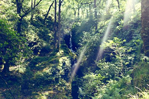 Glendalough_green_Zoetica Ebb_Small_27